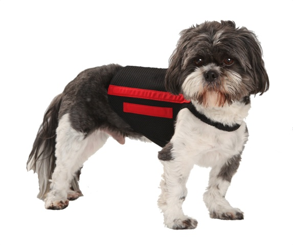 Back Brace for Small Dogs - Bing images