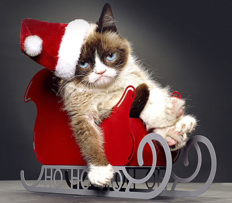 Put Your Paws Together for Grumpy Cat\'s Worst Christmas Ever on ...